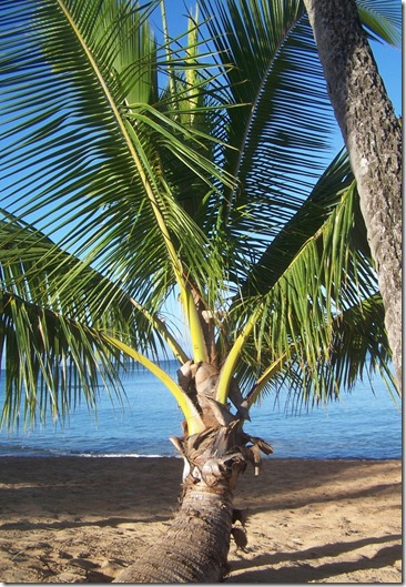 Sunday Palm