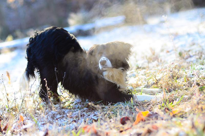 snow dog-3511