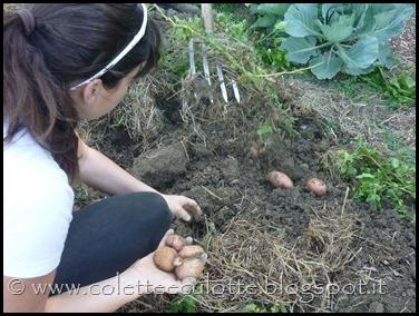 Raccolta delle patate all'OrtoLà