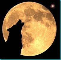 lobos imagenesifotos (5)