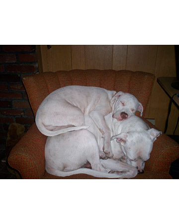 ...They are resourceful... (Suki who was born deaf, sleeping on top of her mom, Sugar)