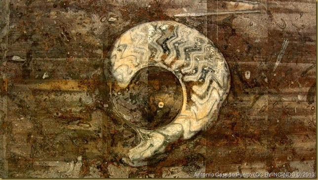 Ammonite incrustado en la roca