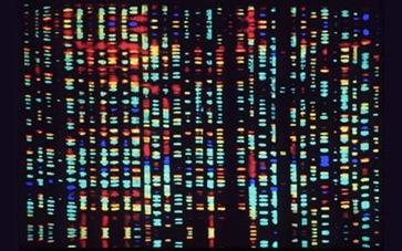 genome_1748527a