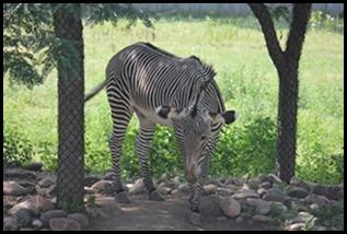 Zoo5 060