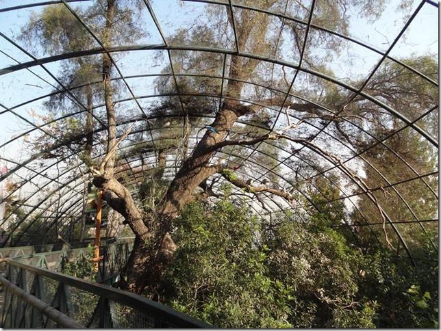 Santiago_Zoo_DSC03851