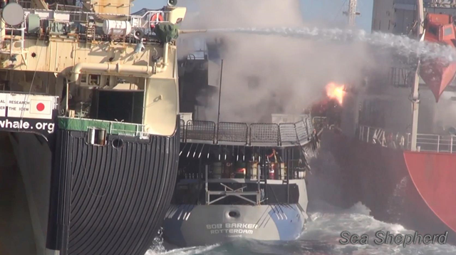 A 'flash bang' concussion grenade from the Nisshin Maru explodes on the fuel tanker Sun Laurel, a vessel so combustible that smoking is not permitted on the ship, 25 February 2013. Also visible on the Bob Barker's deck are barrels of unleaded petrol and aviation turbine fuel (ATF), which is highly combustible. The Nisshin Maru is ramming the Bob Barker, with the intent of sandwiching the Bob against the Sun Laurel. Photo: Sea Shepherd Conservation Society