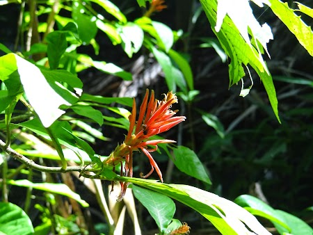 19. Floare exotica.JPG