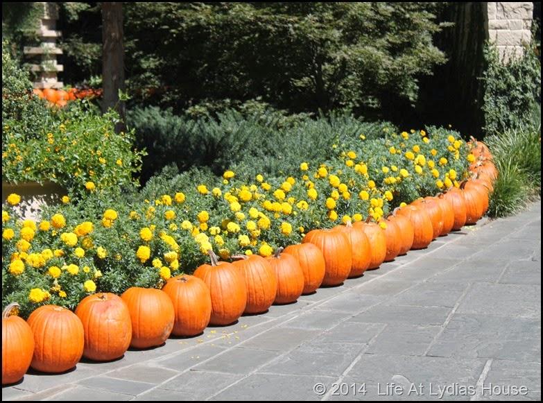 Dallas Arboretum - pumpkin festival-pumpkin walways 3