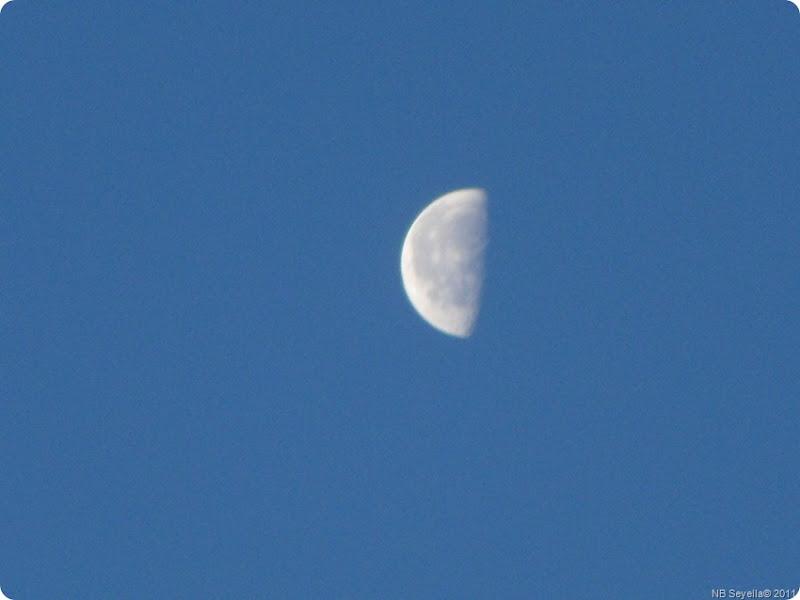 SAM_0001 Half Moon