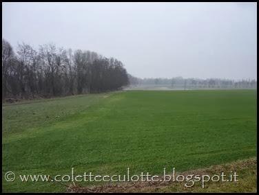 Passeggiata sull'argine dopo la piena - Padulle - 11 gennaio 2014 (28)