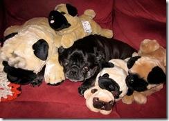 Pug Pile_Resized.