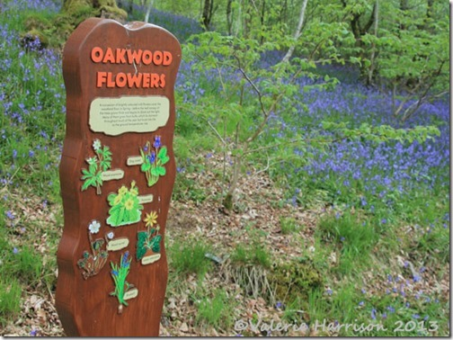 8-oakwood-flowers