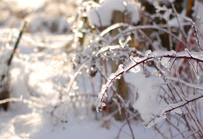 Snow51