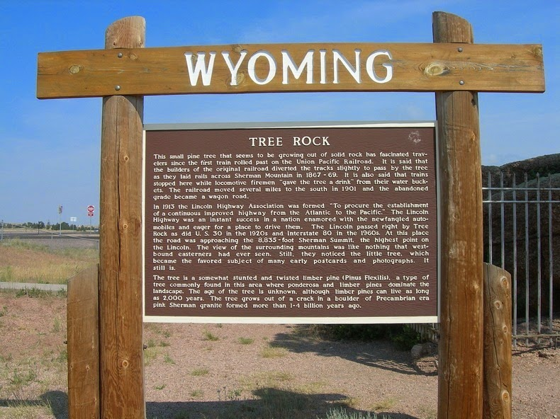 tree-rock-wyoming-4