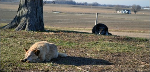 Kodi and Sadie naptime