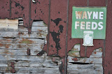 """Wayne Feeds"" - copyright David Thompson"