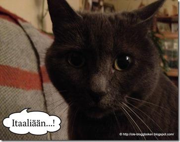 Katten Bamsanedited