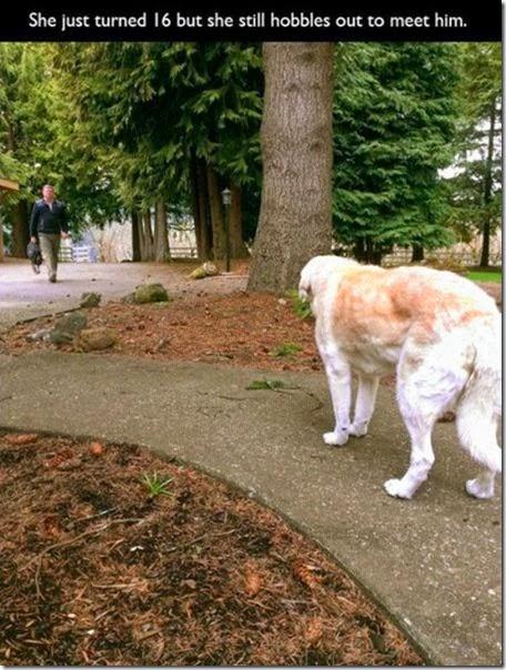 dogs-best-friend-018