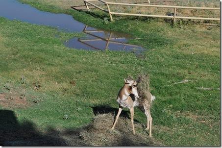 07-11-11 zoo 26