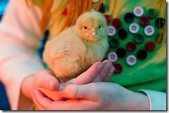 ChicksNewMay4-9155