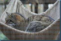 2011-11-28 Wildwood 120