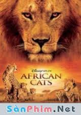 Mèo Châu Phi