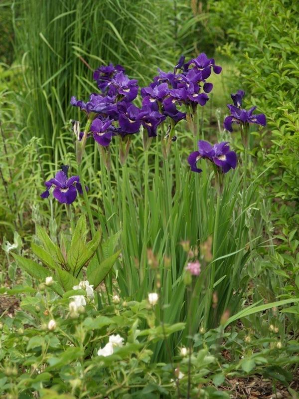 2011-06-24 Hagen i juni (54)