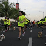Pet Express Doggie Run 2012 Philippines. Jpg (86).JPG