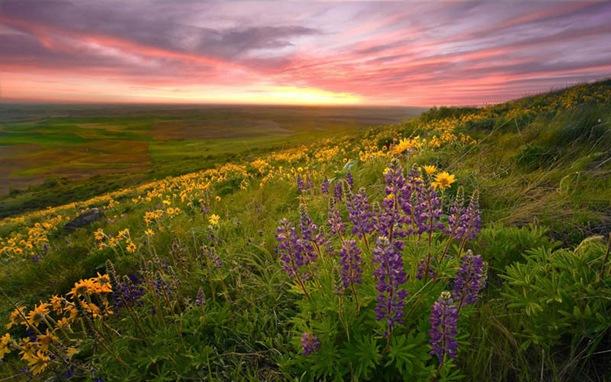 divine-spring-sunset-2