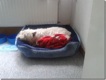 2012-06-27 Max schläft