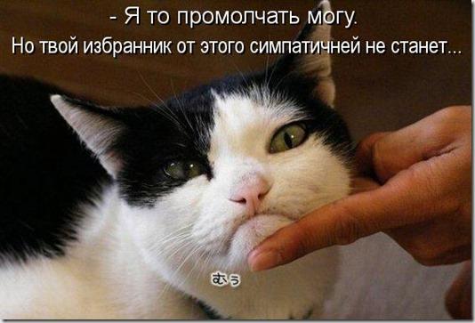 kotomatritsa_Mp