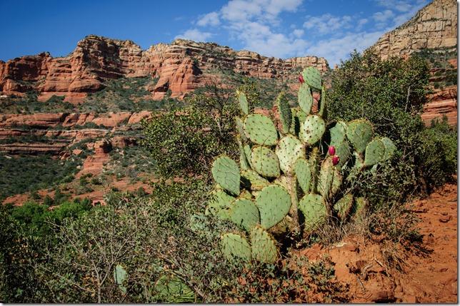 Arizona 041