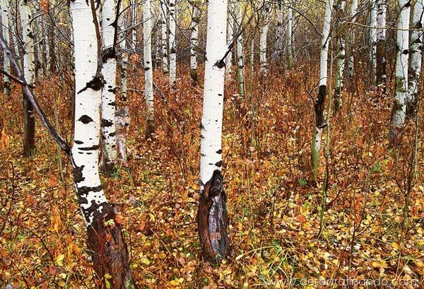 camuflagem-invisivel-animal-camouflage-photography-art-wolfe-desbaratinando (3)