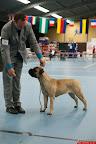 20130510-Bullmastiff-Worldcup-0753.jpg