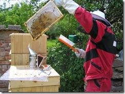 včelky a med květen 078