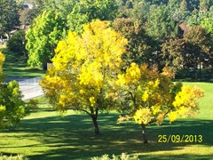 Fall 2013 003