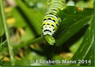 caterpillar rear end