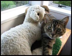 Poppy & lamb