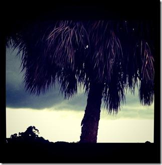 treestorm1