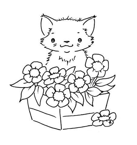 gatinho-com-flores