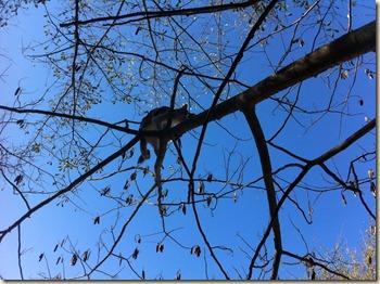 up a tree 2
