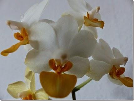 2015_04 Orchideen (1)