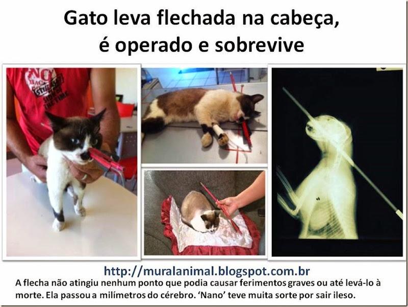 Gato com Flecha Cabeça