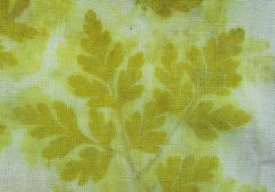 Unbekanntes Waldkraut Eco Print auf Wolle Detail