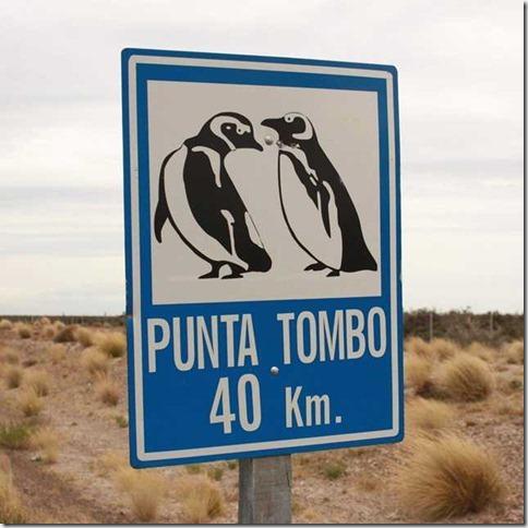 Punta_Tombo_IMG_8149