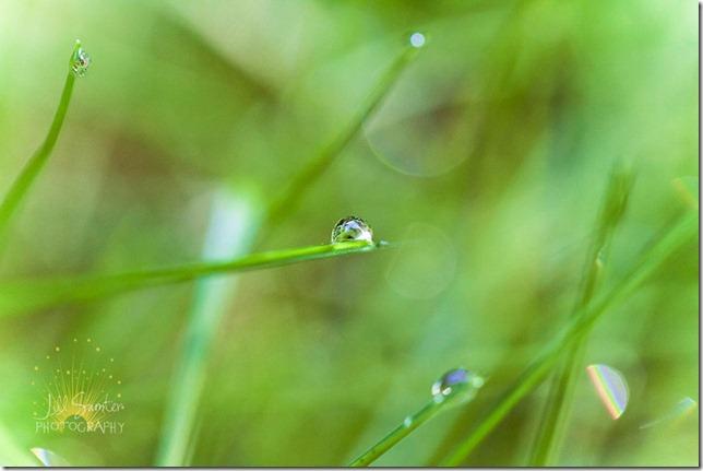 grass-7780