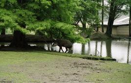 2002.06.11-153.09 tapir