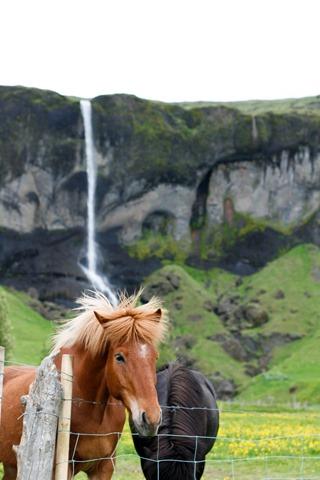 Iceland-3065