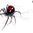 spiders-11.jpg