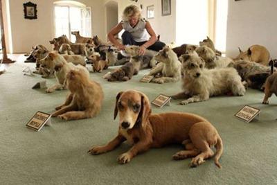 Barão tinha cerca de 200 cães, sendo que 51 deles foram empalhados e fazem parte da coleção. (Foto: Radek Mica/AFP)
